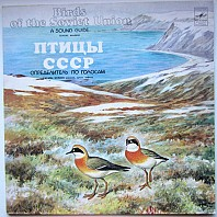 Birds of the Soviet Union - Divers. Waders